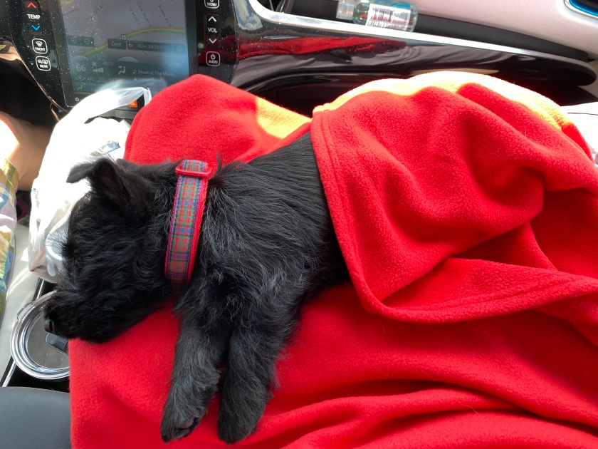 Puppy sleeping on red blanket
