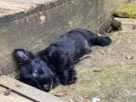 Puppy lying on rocks